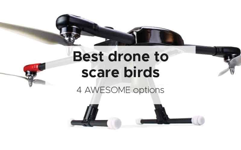 Best drone to scare birds [4 AWESOME options]